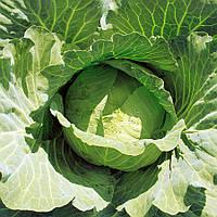 Семена среднеранней капусты 65дней, Джекпот F1, сорт белокачанный (2 500шт), головка 1,8 - 2,0кг