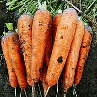 Семена моркови Тема F1, 110дней, длина плода 18 - 22см, 5000шт