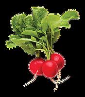Семена редиса выгон - 20 дней Прада F1, 250грамм, плод 30 - 35 грамм, диаметр 4 - 5см
