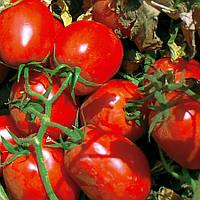 Семена томата EZ 052 F1 ранний сорт, 95 - 100дней, плод 100 - 110грамм, 5000шт