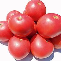 Семена томата EZ 2104 F1 ранний сорт, 95 - 100дней, плод 190 - 210грамм, 500шт