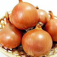 Семена лука Титан F1, мех.уборка, поздний 130 - 135дней, 140 - 170грамм, 250 000шт