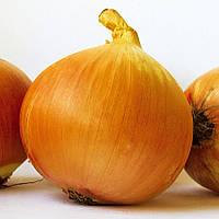 Семена лука Патриот F1, мех.уборка, средний 115 - 120дней, 8 месяцев хранения, 250 000шт