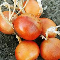 Семена лука Феникс F1, ультра-ранний 80 - 85дней, 120 - 140грамм, 250 000шт
