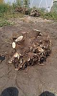 Удаление пней и деревьев  харьков