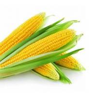 Тести Дрим 5000 с.  кукуруза  Агризатен