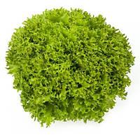 Салат листовой Экспедишн 1000 шт