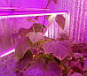 Светильник для растений комнатных SL-046F 46W линейный 12V IP67 (fito spectrum led) Код.58857, фото 2