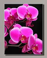 Картина Розовая орхидея HAS-252 42*55