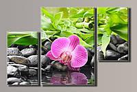Картины модульные Орхидея на камнях 3