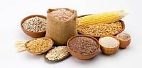 Кукурудза фуражная оптом