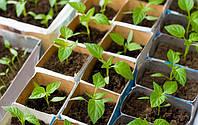 Как посадить семена перца
