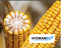 Семена кукурузы Адевей от Лимагрейн  ФАО  290