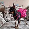 """Платье для собаки """"Рандеву"""". Одежда для собак, кошек, фото 7"""