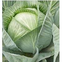 Мандарин F1 - капуста белокочанная, 50 семян, Clause Франция - Фасовка