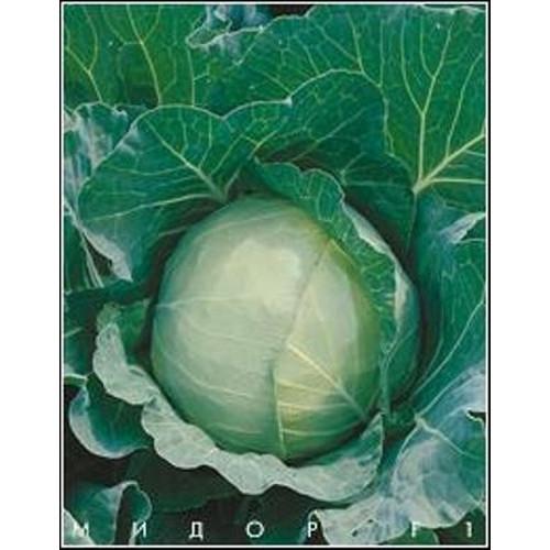 Мидор F1 - капуста белокочанная, 50 семян, Moravo Seed - Фасовка  - «Фермер Центр» семена почтой в Николаеве