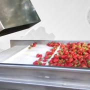 Оборудование по переработке ягод и овощей
