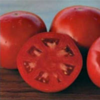 Платинум F1 - томат детерминантный, 1 000 семян,  Nunhems (Нунемс) Голландия