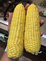 Багратион F1 - сахарная кукуруза, 1 000 семян, Мнагор, Украина
