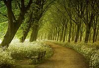 Фотообои флизелиновые на стену 366х254 см 8 листов: природа - Лесная дорожка