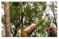 Спилить (удалить, обрезать) аварийное дерево в Буче, лучшая ЦЕНА
