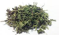 Вероника лекарственная трава (вероника обыкновенная змеиная головка лежачка горлянка анютины глазки)