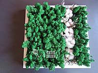 """Новая эко-картина """"Хлопок"""" из мха """"Artis Green"""", P5"""
