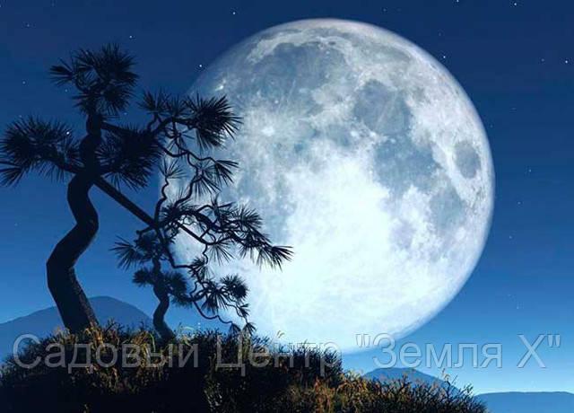 Лунный посевной календарь на 15.03.17г.