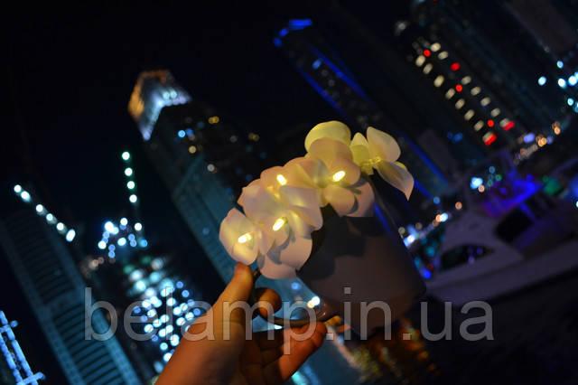 светодиоды и орхидеи
