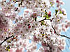 "Фотообои "" Spring"" 254х368 8-507 NG"