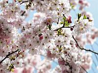 "Фотообои "" Spring"" 254х368 8-507 NG, фото 1"