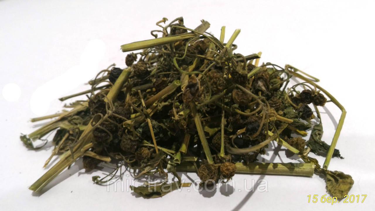 травяные сборы от паразитов в организме человека