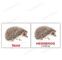 """Карточки мини украинско-английские """"Дикие животные/Wild animals"""""""