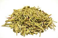 Яснотка белая трава, фото 1