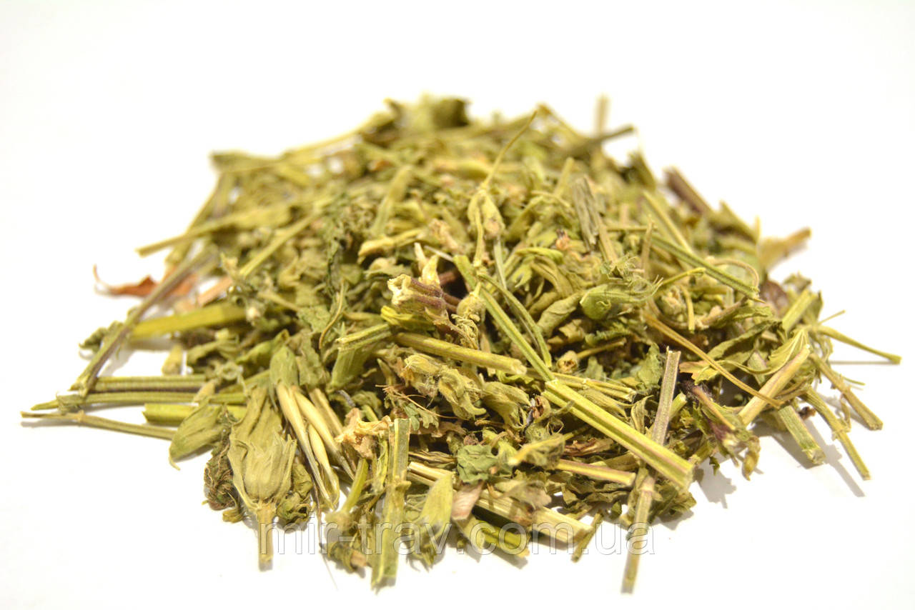 Яснотка белая трава