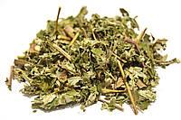 Лабазник вязолистный трава (таволга, гадючник), фото 1