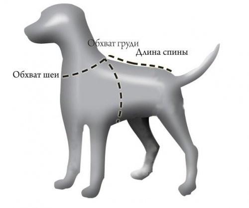 Размеры одежды для собак. Как измерить собаку и подобрать для нее правильный размер одежды?