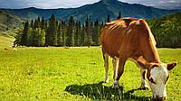 """Энергетически протеиновый премикс для высокопроизводительных коров """"Старт Милк"""""""