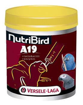 Молоко Versele-Laga NutriBird A19 для птенцов крупных попугаев, 0,8 кг