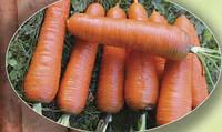 Семена моркови Курода 0,5кг. Agri.