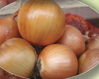 Семена лука Даммика F1  250 000 сем. Agri.