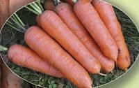 Морковь Шантанэ 500 г. Agri.