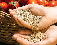 Как подготовить семена томатов к посадке?