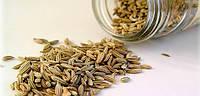 Как правильно сеять семена укропа?