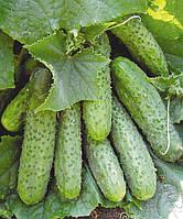 Семена огурца корнишон Маша F1 1000 шт