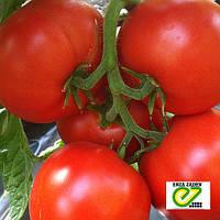 Красный крупноплодный томат Агилис F1 / Agilis F1 от Энза Заден (Enza Zaden)