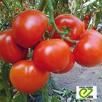 Красный крупноплодный томат Ралли F1 / Rally F1 от Энза Заден (Enza Zaden)