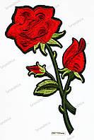 Нашивка роза