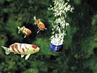 Аэратор для пруда OASE AquaOxy CWS 2000, фото 6