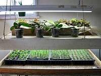 Выбираем фирмы семена зелени для хорошего урожая